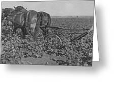 A Farmer Using A Cultivator  Greeting Card