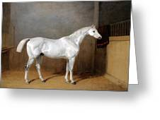 A Favourite Grey Horse Belonging To George Reed Standing In A Loose Box Greeting Card