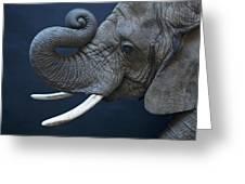 A Female African Elephant, Loxodonta Greeting Card