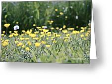 A Field Of Buttercups Greeting Card