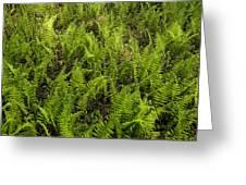A Field Of Ferns Greeting Card