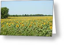 A Field Of Smiles Greeting Card