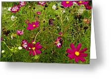 A Field Of Wild Flowers Growing Greeting Card