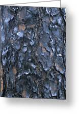 A Fire Scarred Tree Trunk Whose Thick Greeting Card