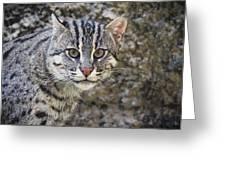 A Fishing Cat Portrait Greeting Card