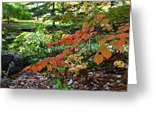 A Flame In The Forest Greeting Card