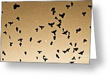 A Flight Of Grackles Circling The Moon Greeting Card