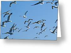 A Flock Of Seagulls Greeting Card