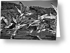 A Flock Of Seagulls Flying High To Summer Sky Greeting Card