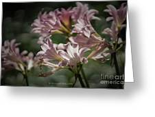Peppermint Surprise Lily - A Floral Abstract Greeting Card