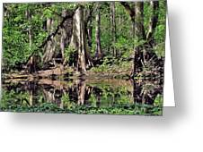 A Florida Riverine Forest 2 Greeting Card