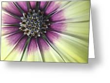 A Flower's Day Greeting Card