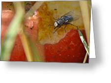 A Fly's Feast Greeting Card