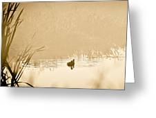 A Foggy Morning Swim Greeting Card