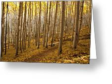 A Forest Of Aspens Greeting Card
