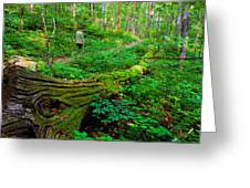 A Forest Stroll Greeting Card