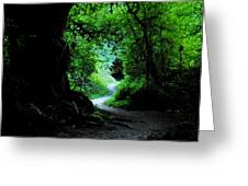 A Forest Trail Greeting Card