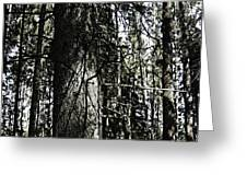 A Forest Walk Greeting Card