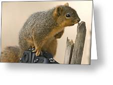 A Fox Squirrel Sciurus Niger Sits Greeting Card