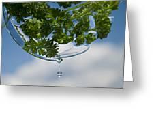 A Fresh Mint Drop Greeting Card