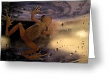 A Frogs World Greeting Card