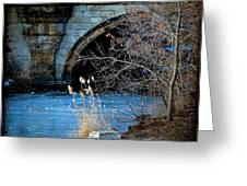 A Frozen Corner In Central Park Greeting Card by Chris Lord
