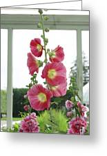 A Garden Greenhouse - Hollyhock Greeting Card