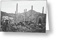 A Gathering Of Cacti Greeting Card