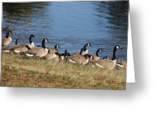 A Gathering Of Geese Greeting Card