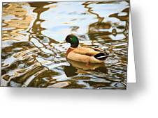 A Gentle Glide Greeting Card