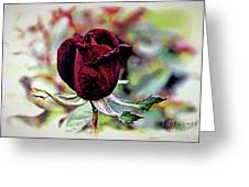A Gift Greeting Card