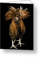 A Golden Polish Chicken Greeting Card