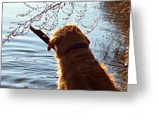 A Golden Retriever And His Stick Greeting Card