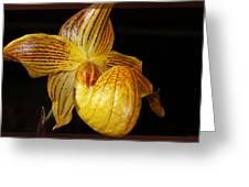 A Golden Slipper Greeting Card