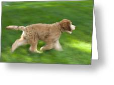 A Goldendoodle Puppy Runs Greeting Card by Joel Sartore