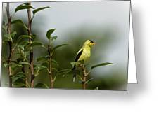 A Goldfinch In A Pear Tree Greeting Card