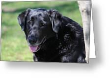 A Good Dog Greeting Card