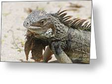 A Gray Iguana With Spines Along It's Back Greeting Card