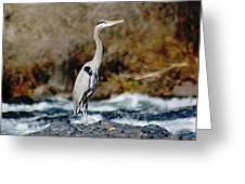 A Great Blue Heron At The Spokane River 2 Greeting Card