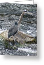 A Great Blue Heron At The Spokane River 3 Greeting Card