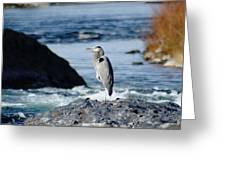 A Great Blue Heron At The Spokane River Greeting Card