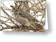 A Great Horned Owl's Wide Eyes Greeting Card