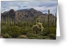 A Green Desert Forest  Greeting Card