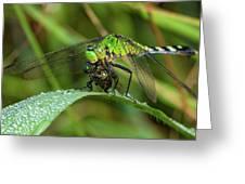 A Green Dragon's Breakfast Greeting Card