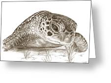 A Green Sea Turtle In Earthtones Greeting Card
