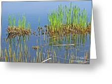A Greening Marshland Greeting Card