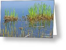 A Greening Marshland Greeting Card