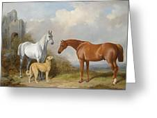 A Grey And A Chestnut Hunter With A Deerhound Greeting Card