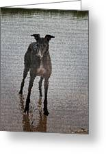 A Greyhound's Play Time Greeting Card by Andrea Lawrence