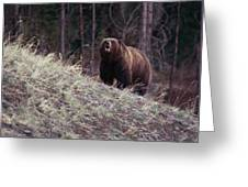 A Grizzly Bear Approaching The Crest Greeting Card by Bobby Model